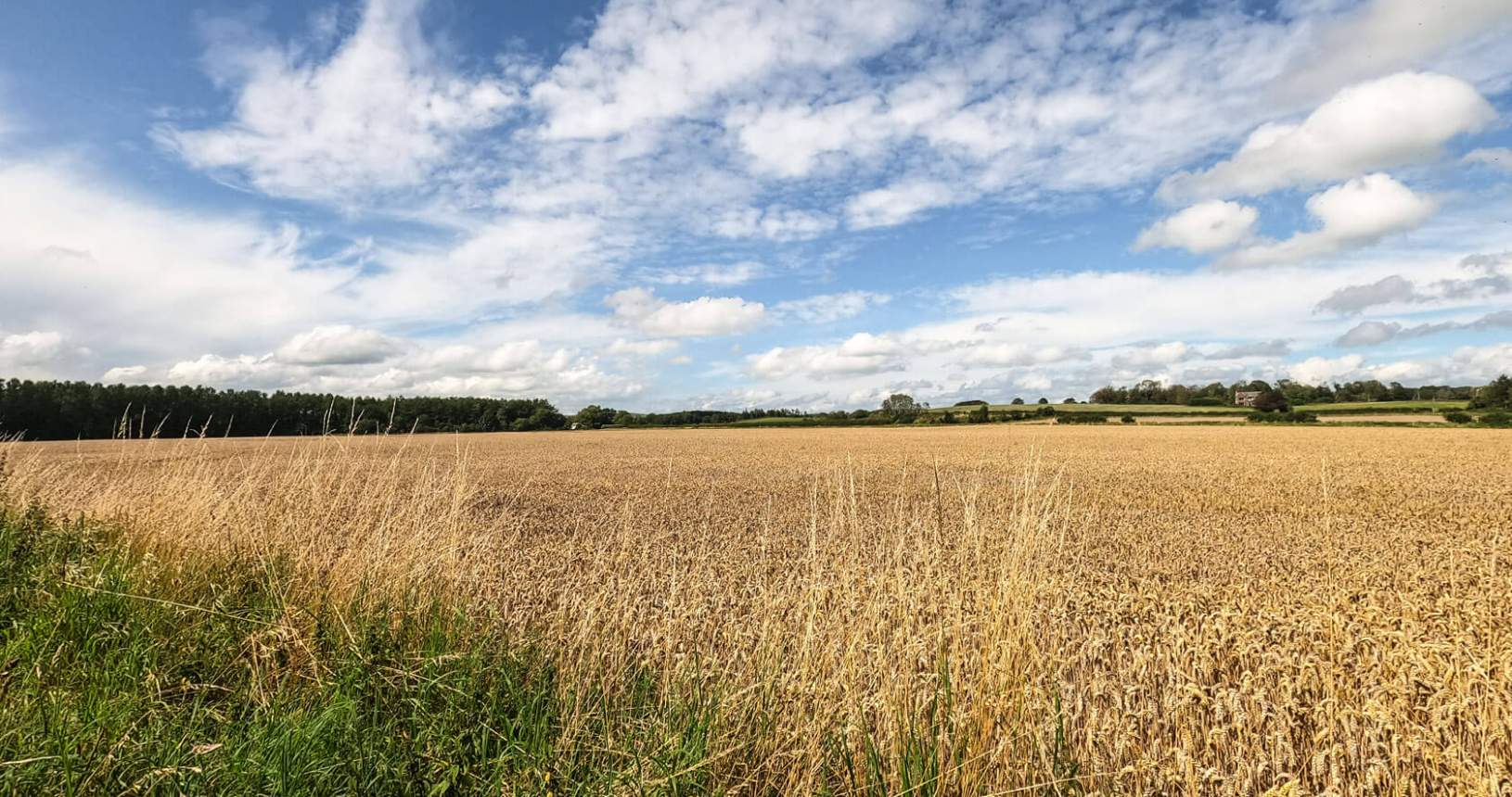 Hoddom Field