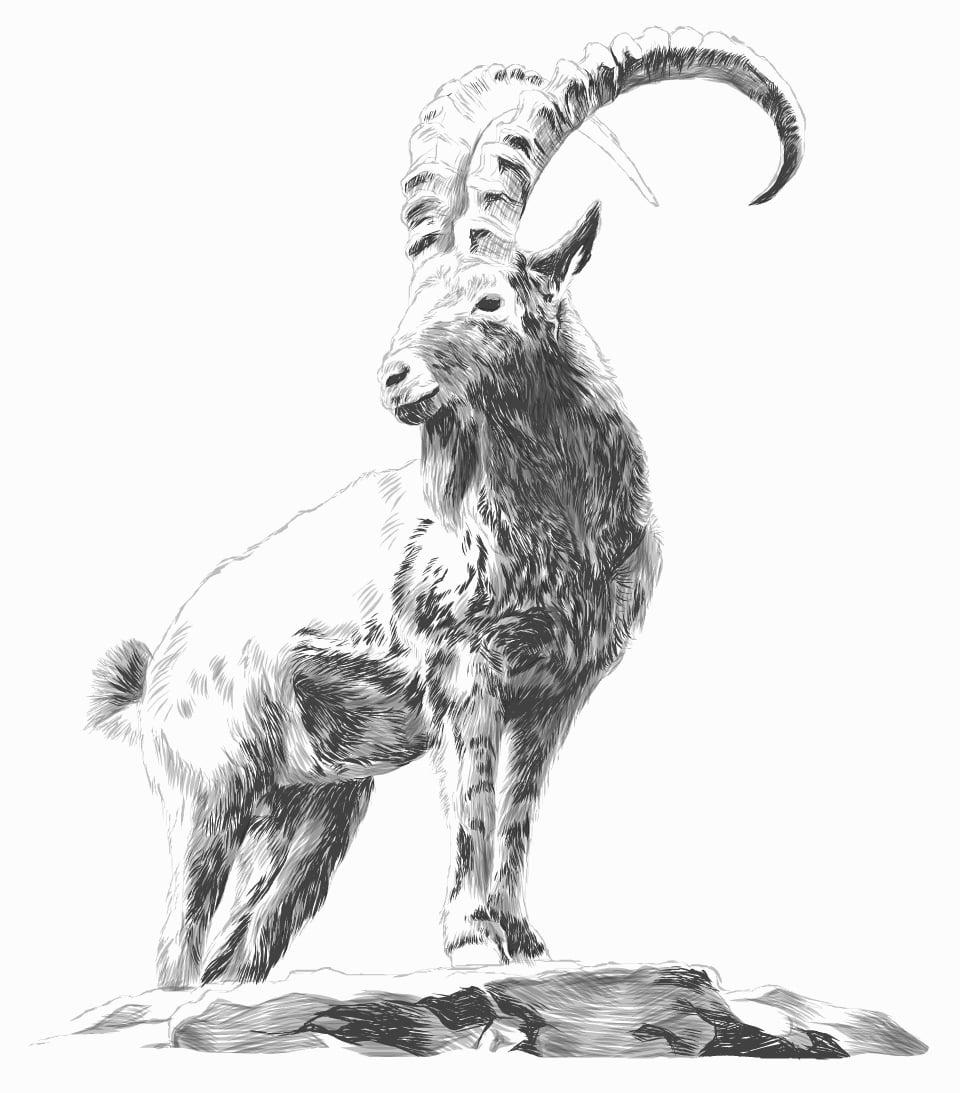 goat-960