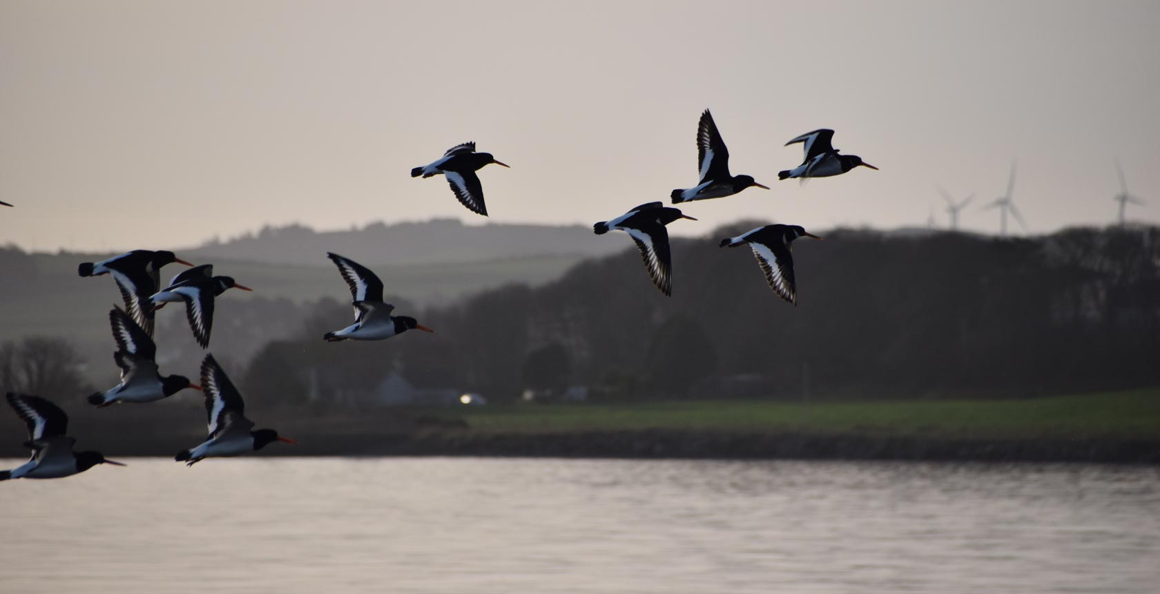 Oyster Catchers over Wig Bay
