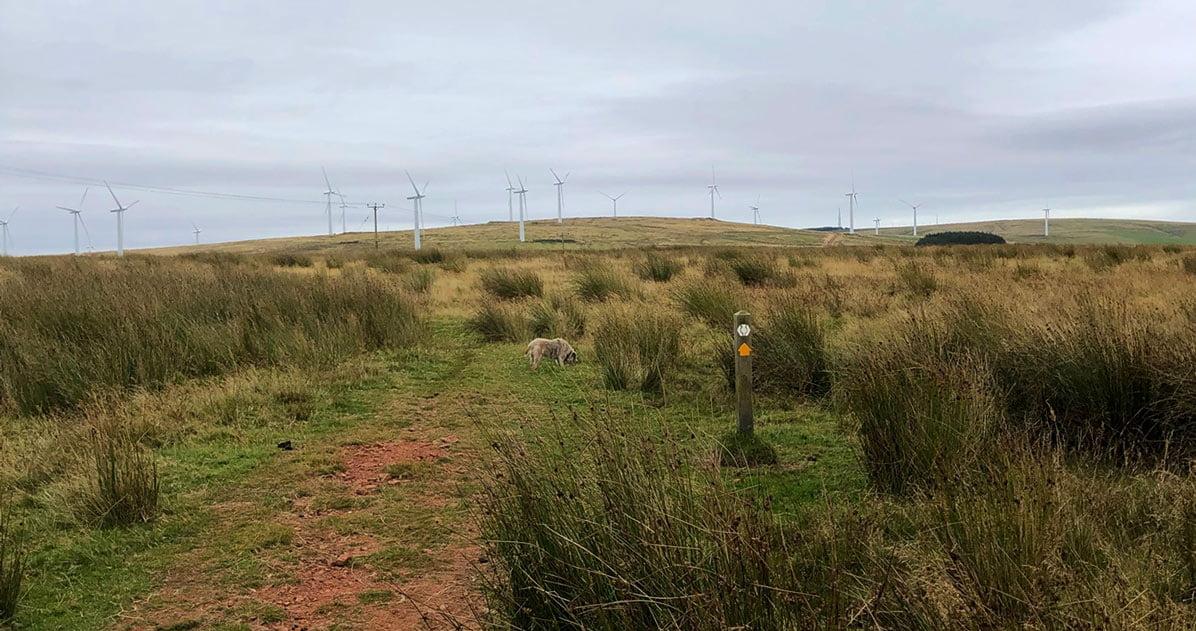 Windmills on Lammermuir